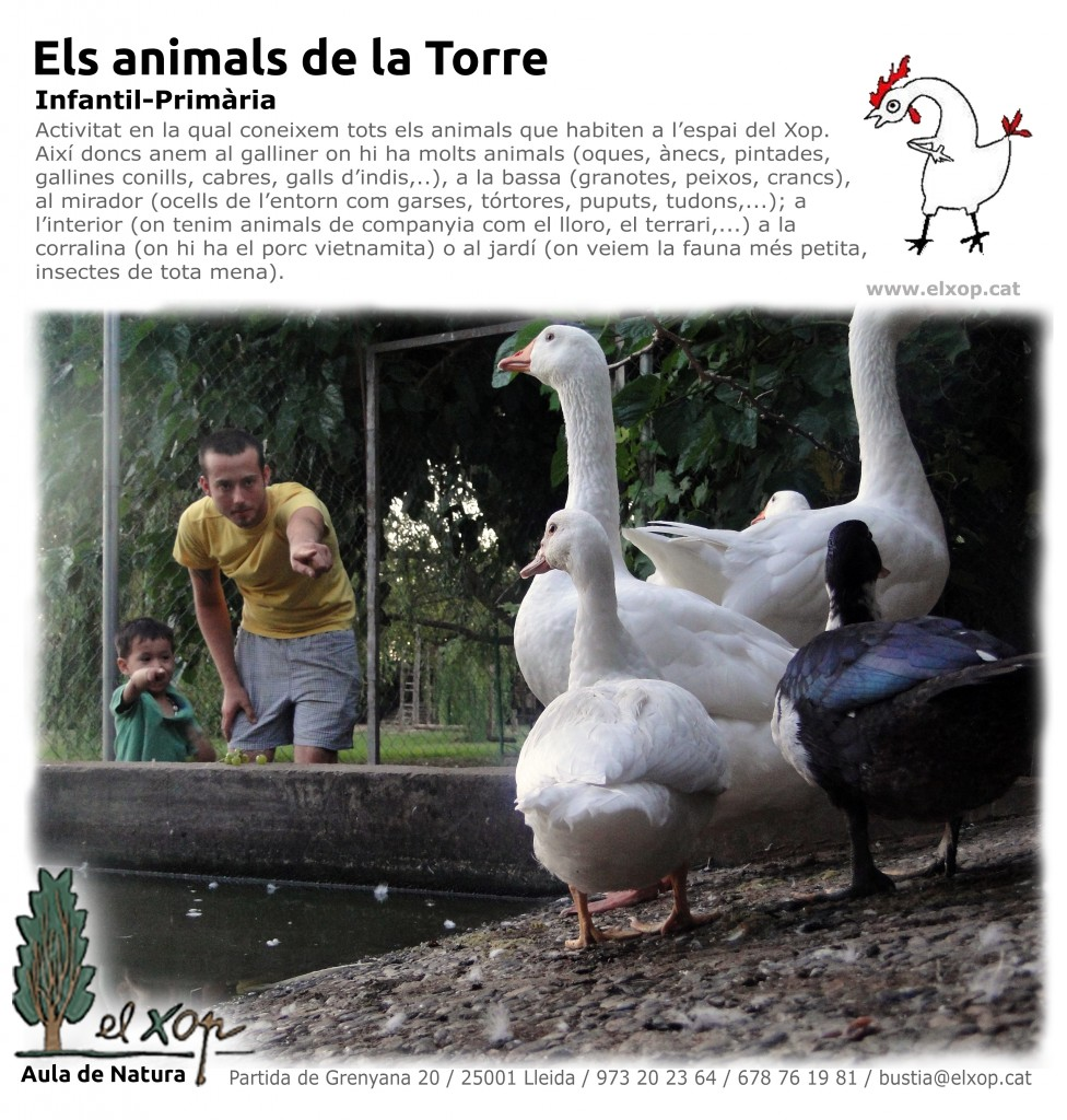 ACT_ANIMALS_TORRE_